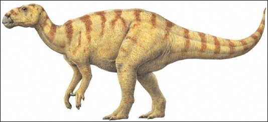 Who have discovered the first dinosaur ?