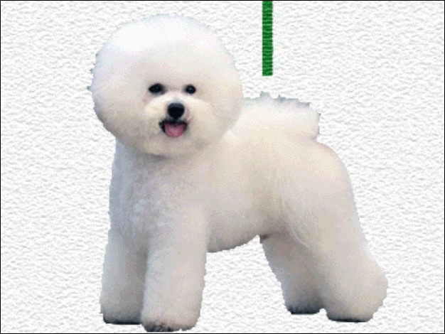 What is this breed?