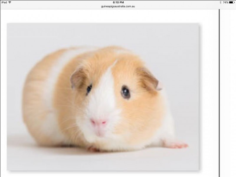 This breed is also the name of an other animal breed :