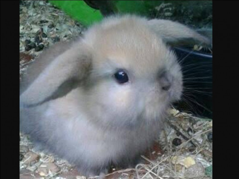 """Is the """"magic rabbit"""" even related to a rabbit?"""