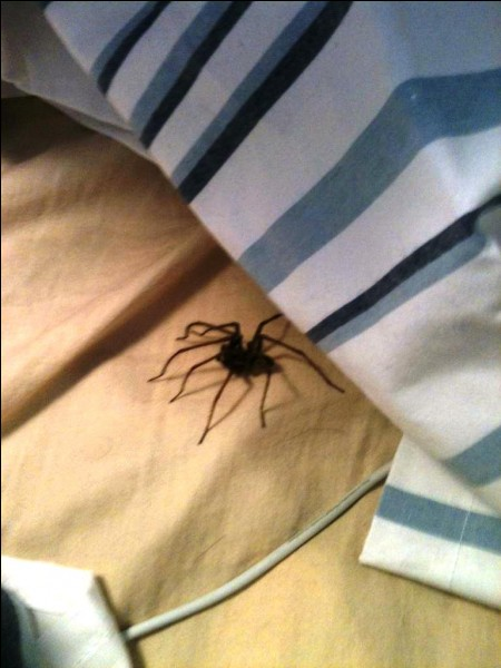 You see a spider in your bed...