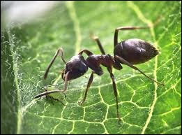 True or false ?This animal is a spider.