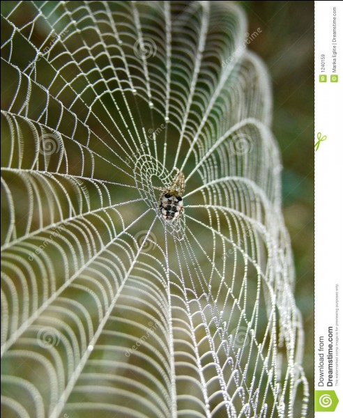 The thread of the spider is more resistant that the steel !