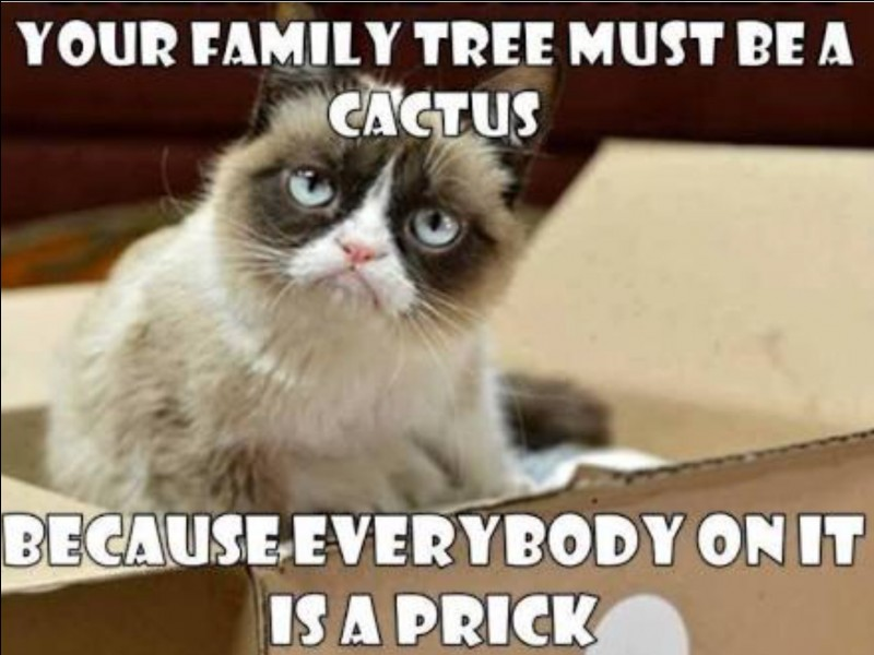 Which of Grumpy Cat's parents does she look more like?
