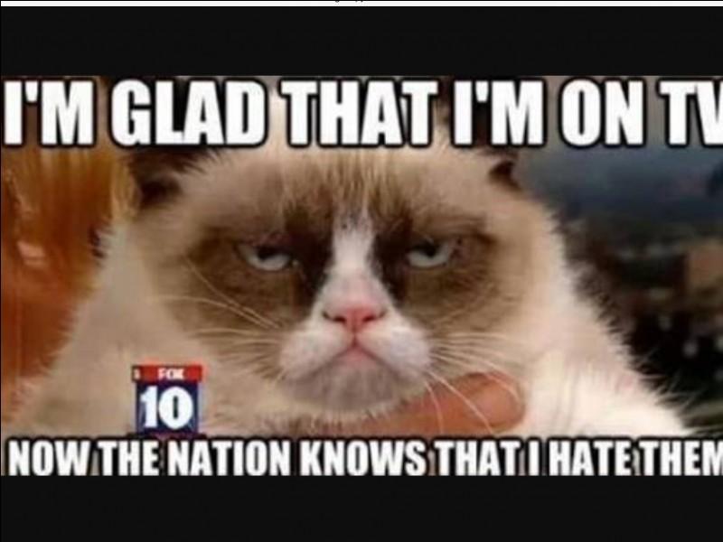 Grumpy Cat Quiz