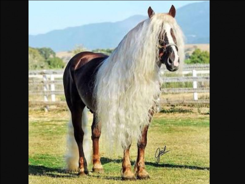 What horse breed is this?