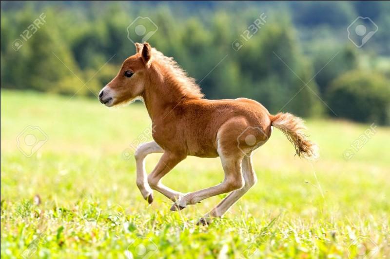 How many foals has Wugongga ever had?