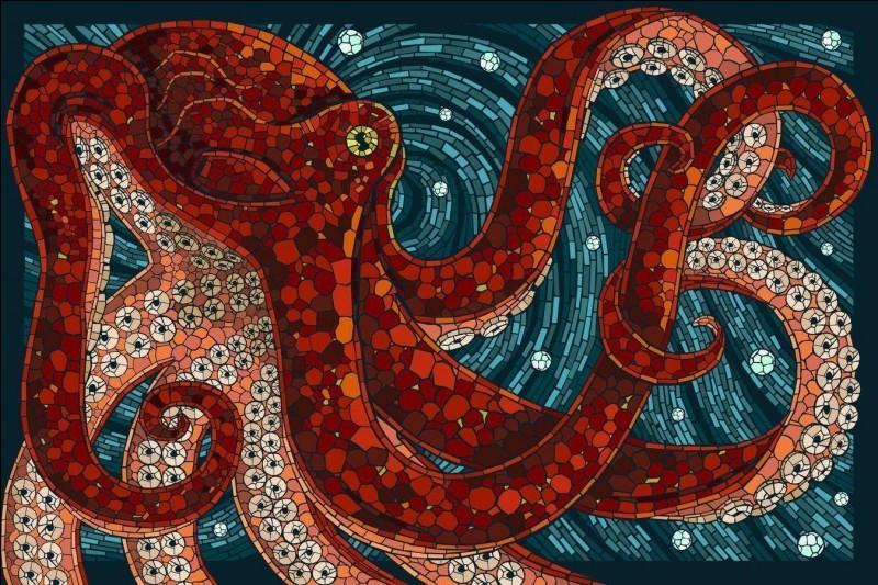 Octopus is :