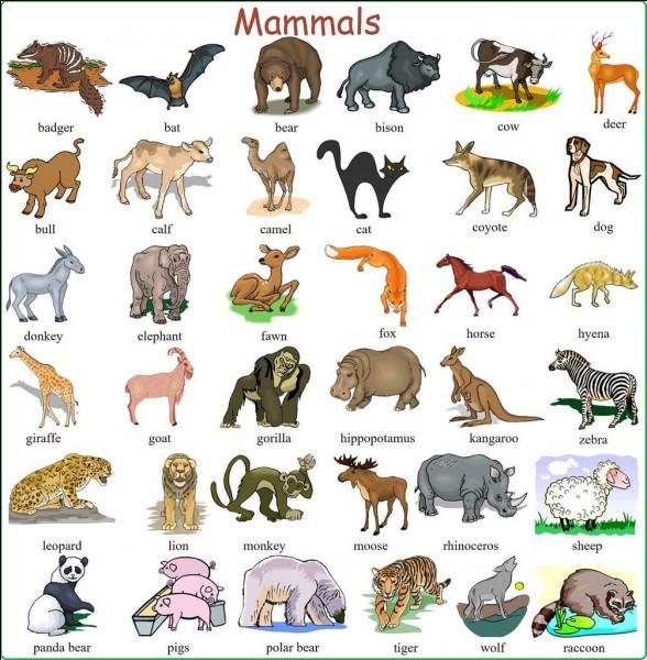 Mammals are :