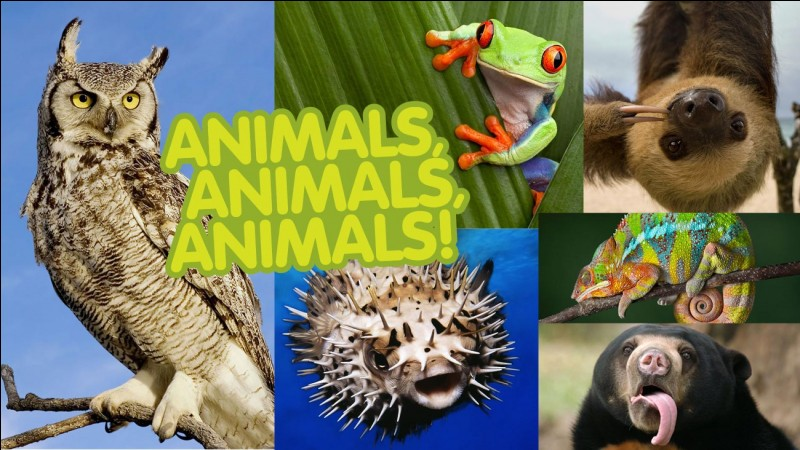 What is your favorite animal out of the four?