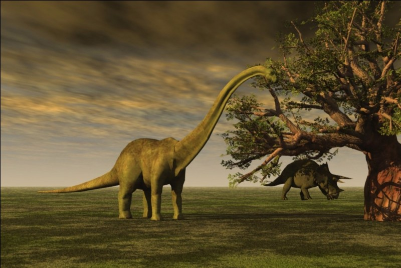 What is the official/real name of Brontosaurus ?