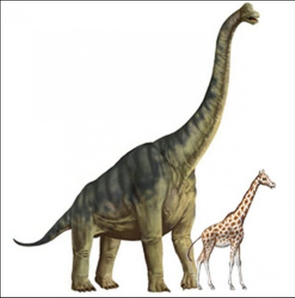 Apatosaurus has a speed of :