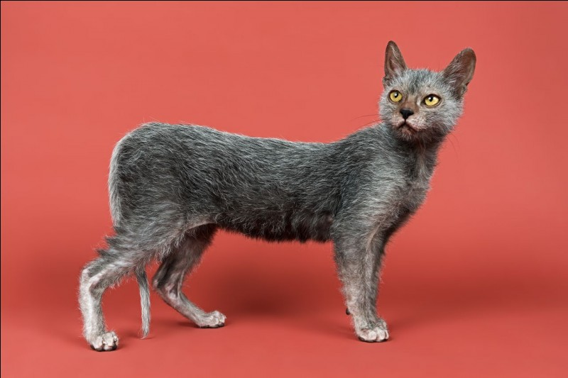 What breed is this?
