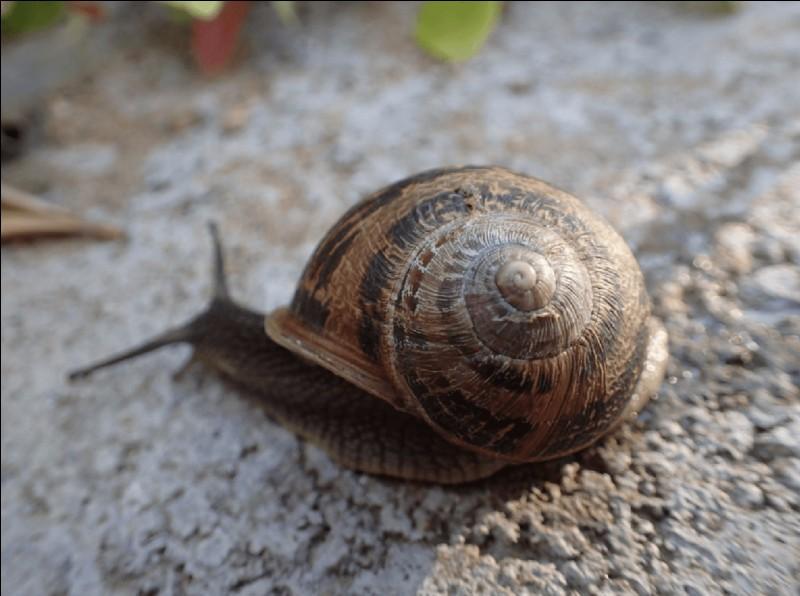 True or false? Snails got teeth.