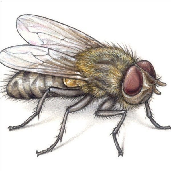 True or false? Flies have cuppings on their legs.