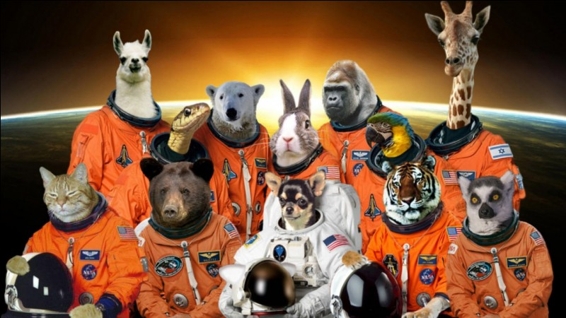 What was the first animal to go into space?