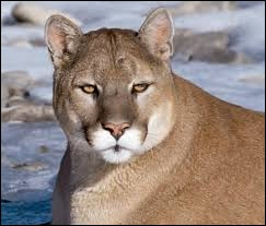 What is the name of this animal ?
