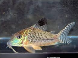 Whats is the name of this fish ?