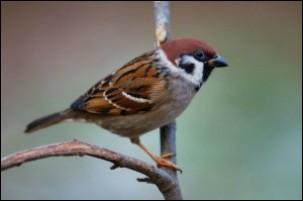 A bird is a(n) :