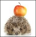 Does hedgehogs likes apple ?