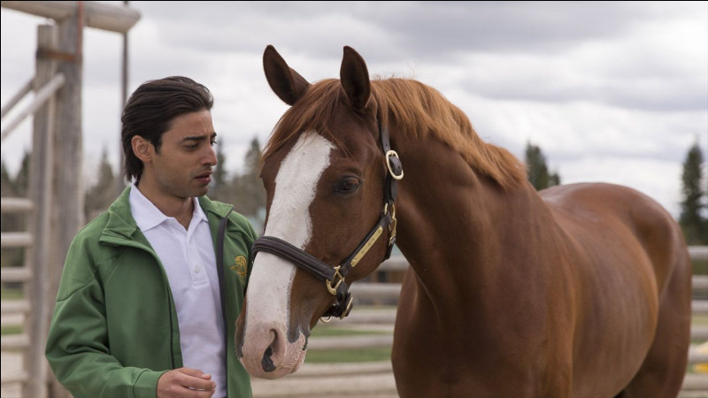 Which horse did Amy have to help after he went on a terrifying plane flight?