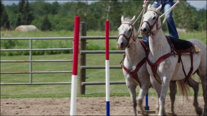 When Georgie started roman riding, which horse did she try to get to work with Pheonix?