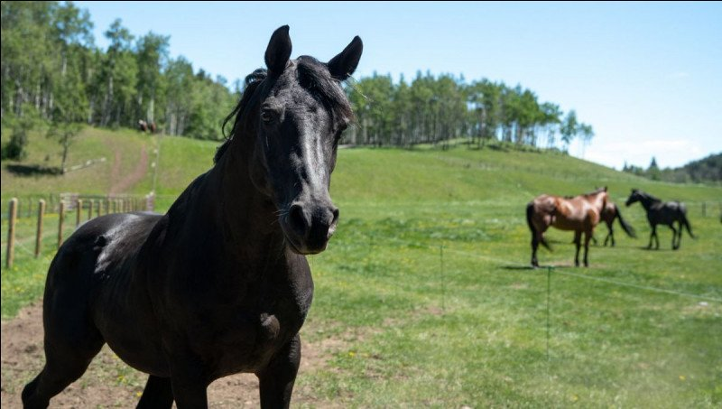 Which of these Heartland horses is a mare?