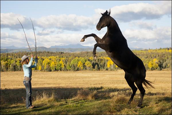 Heartland horses quiz