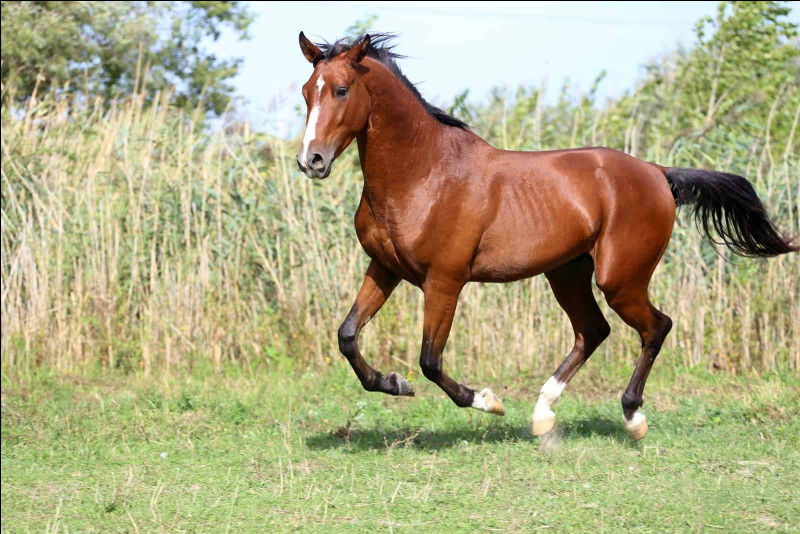 How many beats are in a canter?