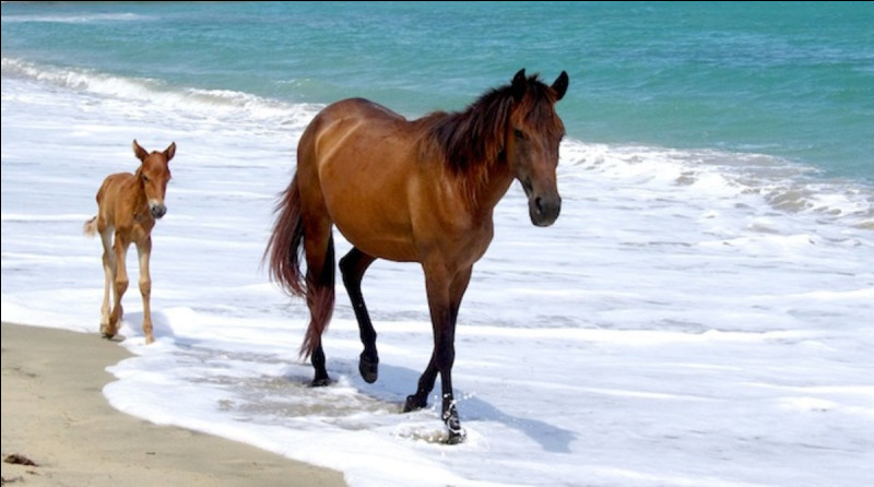 Around how many litres of water does an average horse drink in a day?