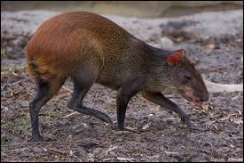 Whats is the name of this animal ?