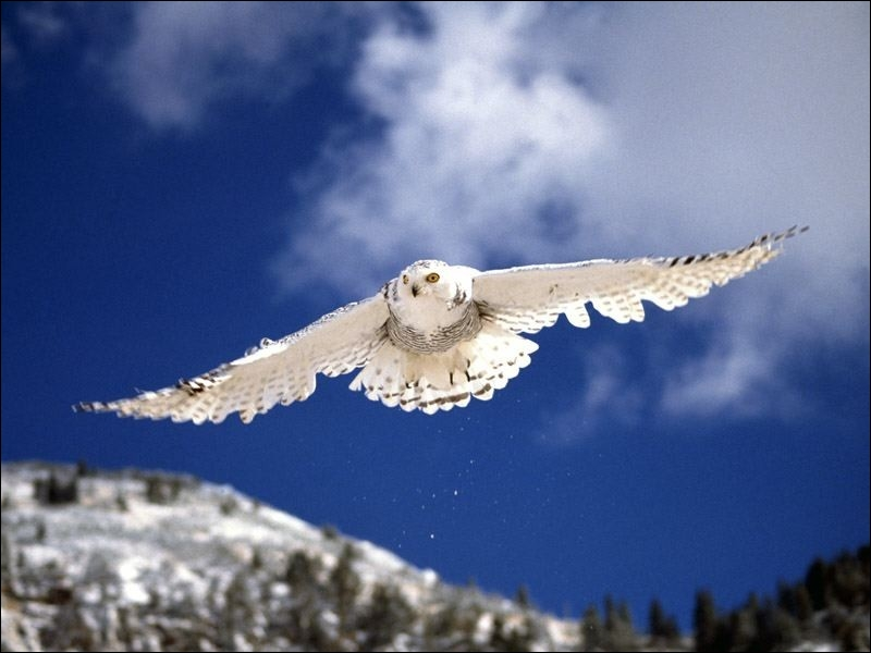 Smart, Hedwig, she comes to look for him in her room !