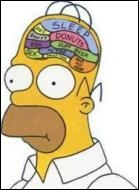 What are the 3 thoughts that occupy Homer's brain almost all the time ?