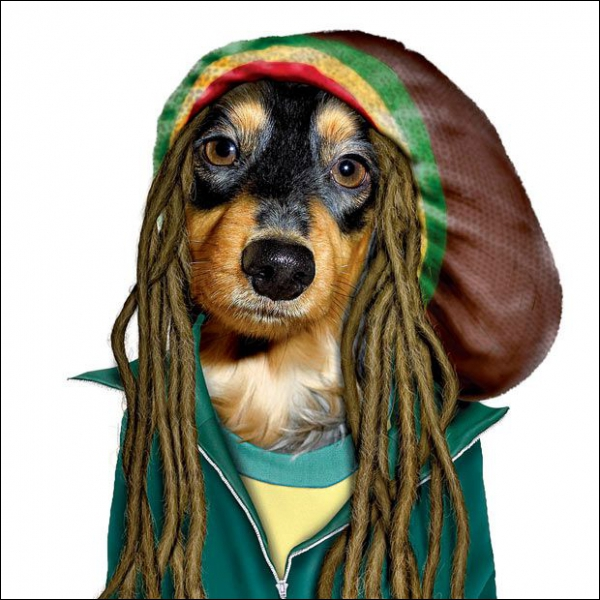 He is the master of reggae :