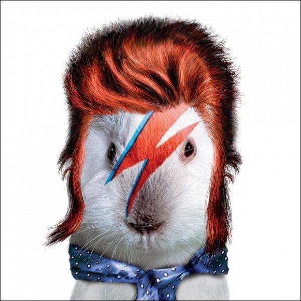 He is a pop icon with heterochromia :