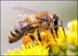 Which movie character has clothes that match the bees ?