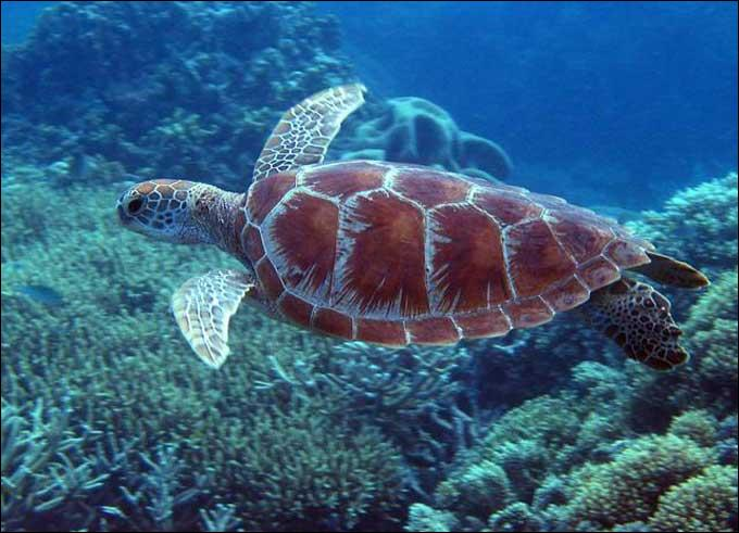 Sea turtles only live in cold water.