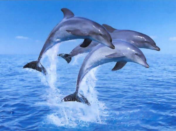 True-false 23 : marine animals !