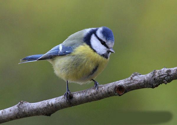 10 birds to recognize
