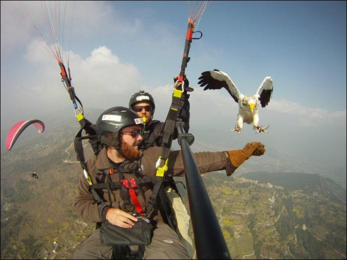 There are eagles in France !