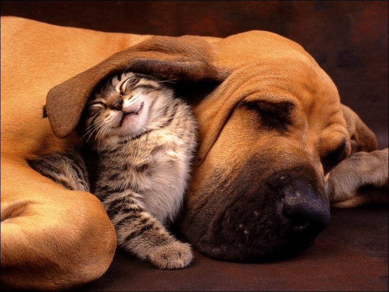 Dogs and cats have vibrissae !