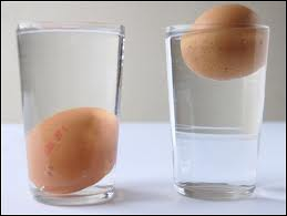 What does a fresh egg do for the day immersed in cold, salted water (preferably) ?