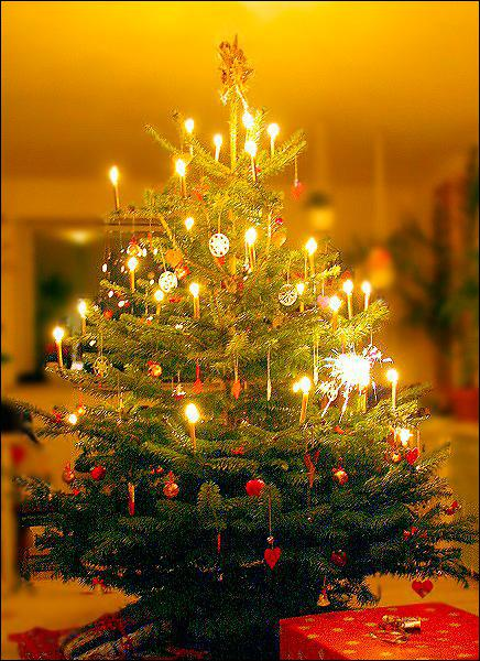 What should you consider when putting lights onto your christmas tree?