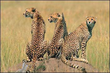 Safari Animal Matching Quiz - Quiz Animals