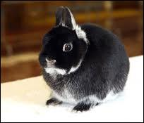 What is the name of this rabbit?