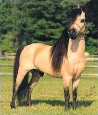 What breed is this horse?