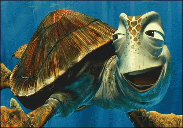 How old is the Sea Turtle ?