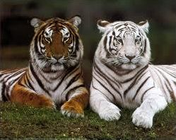 Asian Animals