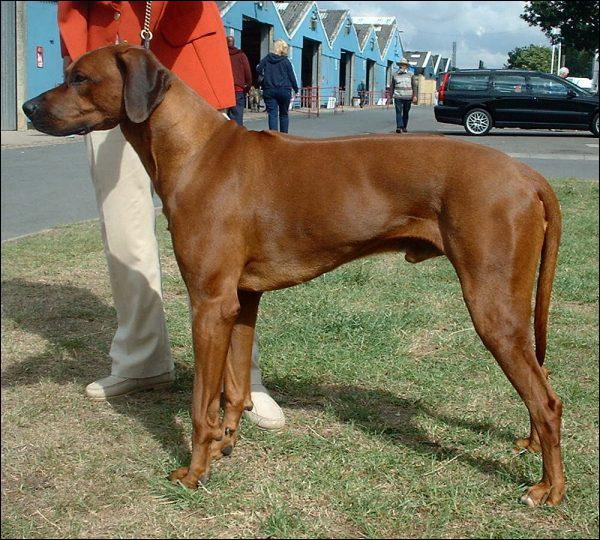 What is the breed of this dog?