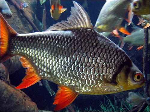 Quiz animal covering quiz sciences for Does swai fish have scales